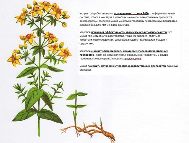 Лекарства и травы: возможен ли союз?