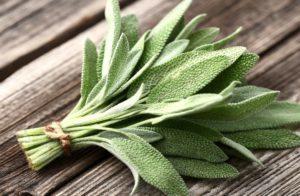 Народная медицина против кашля: 5 популярных рецептов