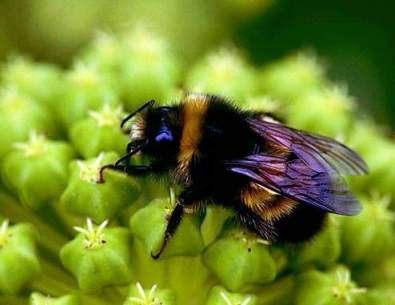 Первая помощь при укусах насекомых