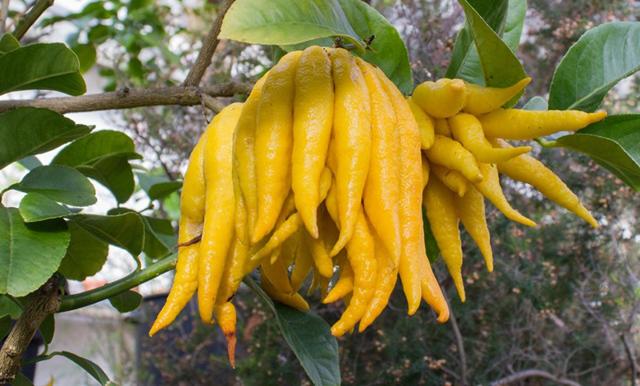 Овощи и фрукты: местные или экзотические