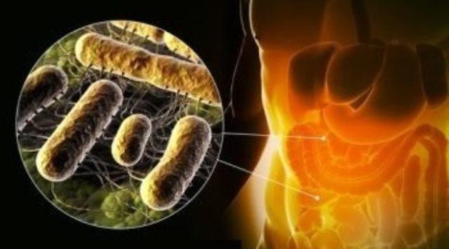 Лечение и профилактика сальмонеллеза