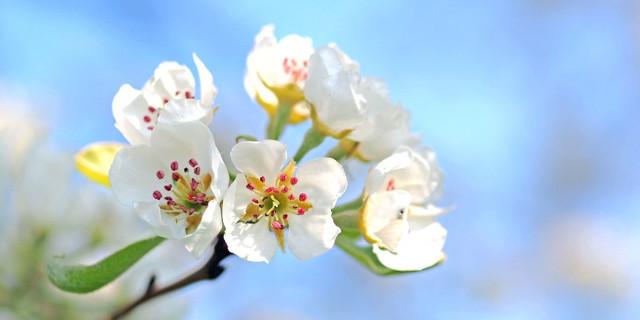 Антигистаминные препараты для лечения аллергии