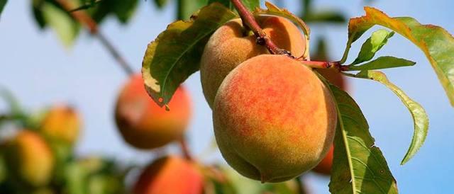 6 фруктовых хитов июля